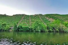 Steile Weinlagen