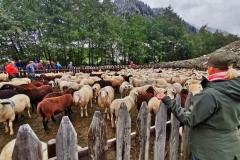 Sammelpunkt für die Herden