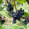 Wein- und Fischerfest Reichenau