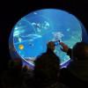 Mythen der Meere im SEA LIFE Konstanz
