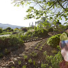 Garten-Rendezvous ohne Grenzen