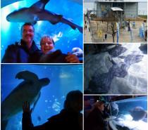 20 Jahre SEA LIFE Konstanz – Eine faszinierende Unterwasserwelt zieht Bilanz