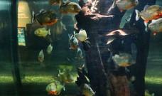 Piranhas im Bodensee