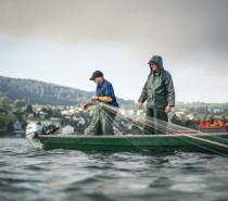 Fischwochen mit Felchen, Kretzer & Co.