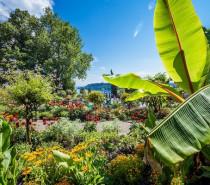 Gartenjahr 2021: Duftende Blütenpracht am Bodensee