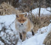 Wo Fuchs und Hase sich gute Nacht sagen